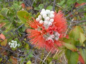 VNP Flower
