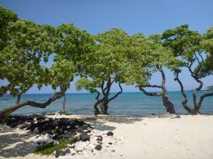 Hawaii Beach 2