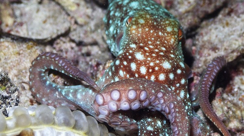 June Octopus