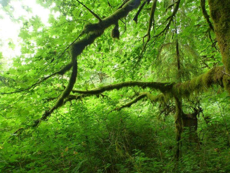 pwn greenery
