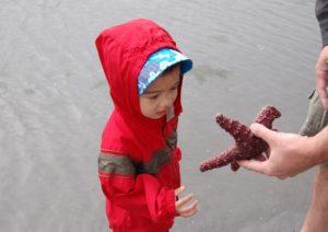 starfish touching