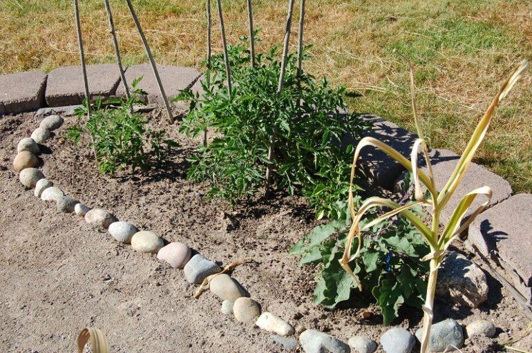 tomatoes and eggplants
