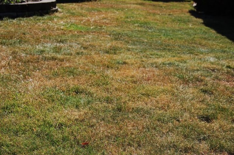 ugly lawn