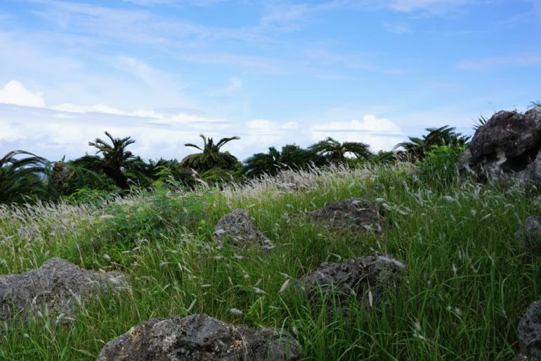 okinawa rocks grass