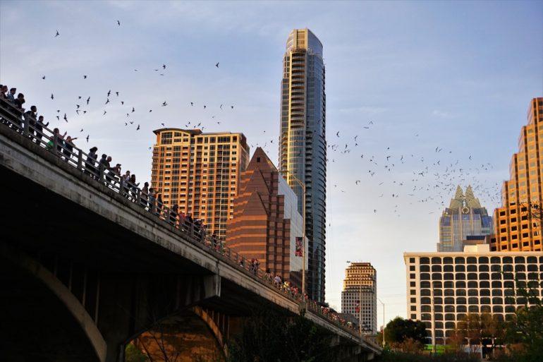 Austin bats.