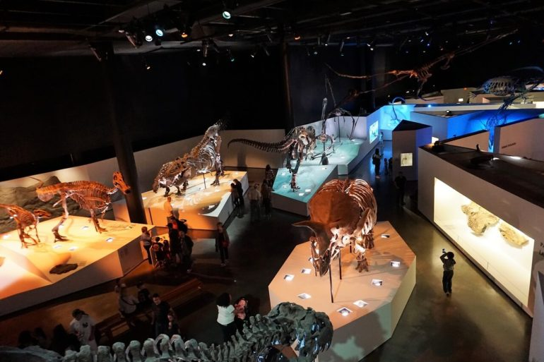 dinosaurs on display