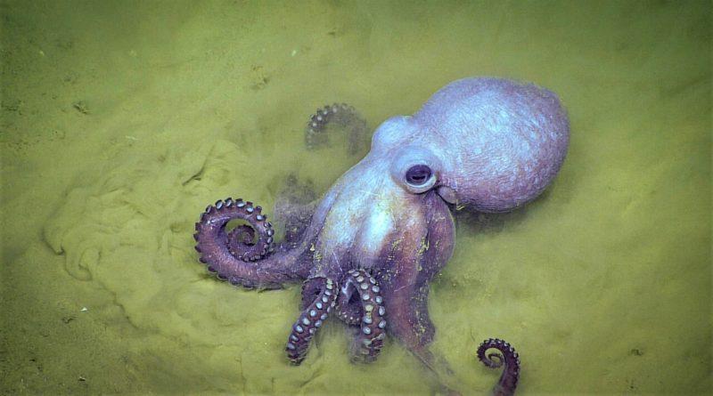 april 2018 octopus