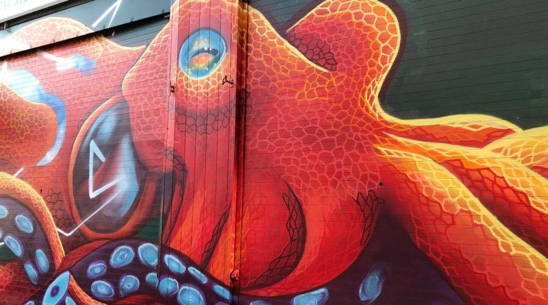 may octopus 2018