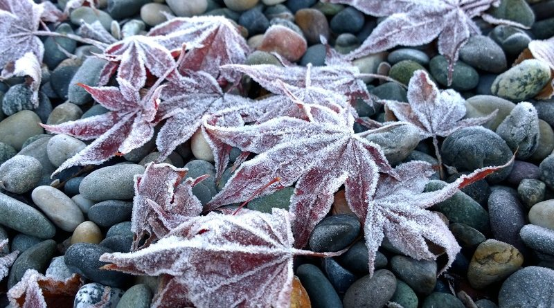 frost leaves