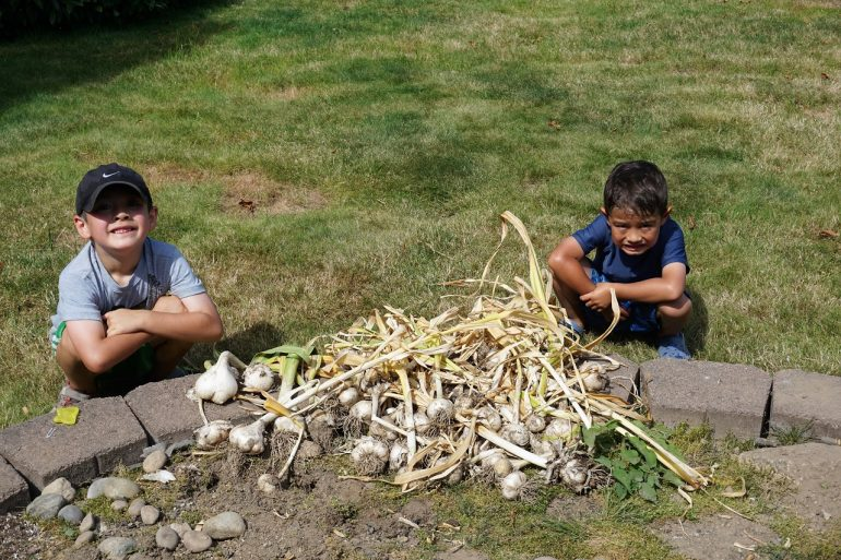 garlic harvesters