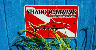 shark warning