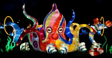 January octopus